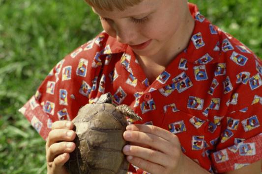Broaștele testoase îi pot îmbolnăvi pe copii