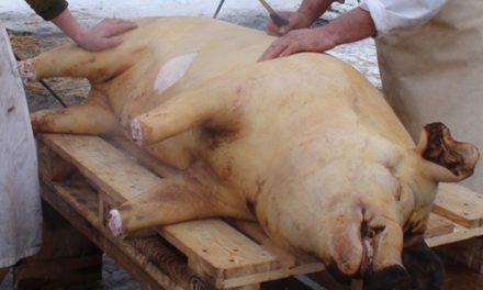 Atenție la consumul de carne de porc: o familie din Satu Mare a ajuns la spital cu trichineloză