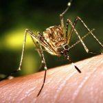 Șase persoane infectate cu virusul West Nile au murit. VEZI MĂSURILE DE PROTECȚIE