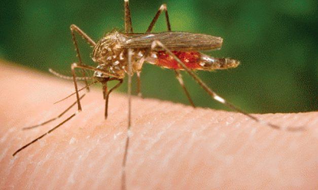 Un bărbat infectat cu virusul West Nile a murit