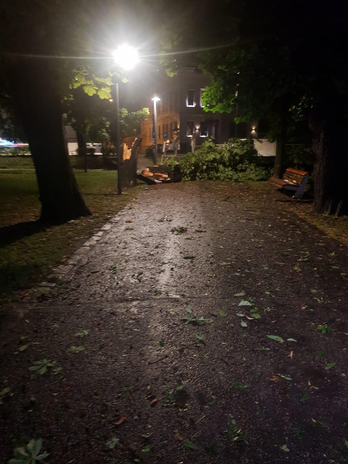 Accesul ambulanţelor blocat de arbori doborâţi în curtea secţiei de hematologie a Institutului Ocologic din Cluj